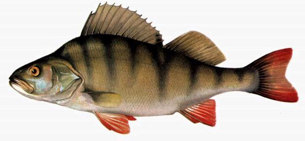 прикормка мелкой рыбы